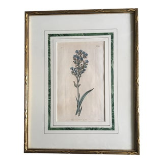 19th Century Hand Colored Botanical Print For Sale