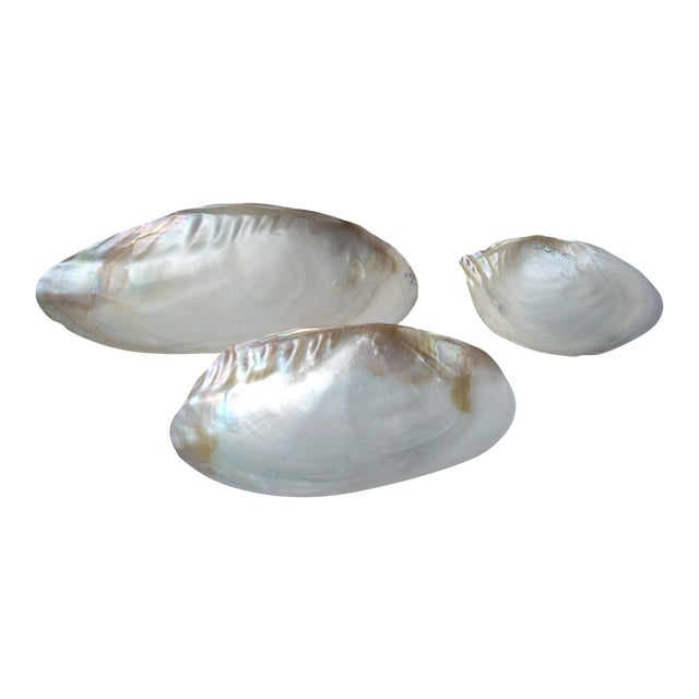 Nautical Iridescent Clam Seashells - Image 1 of 3