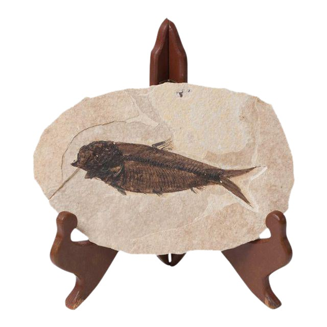 Fossil Fish on Stand - Image 1 of 8