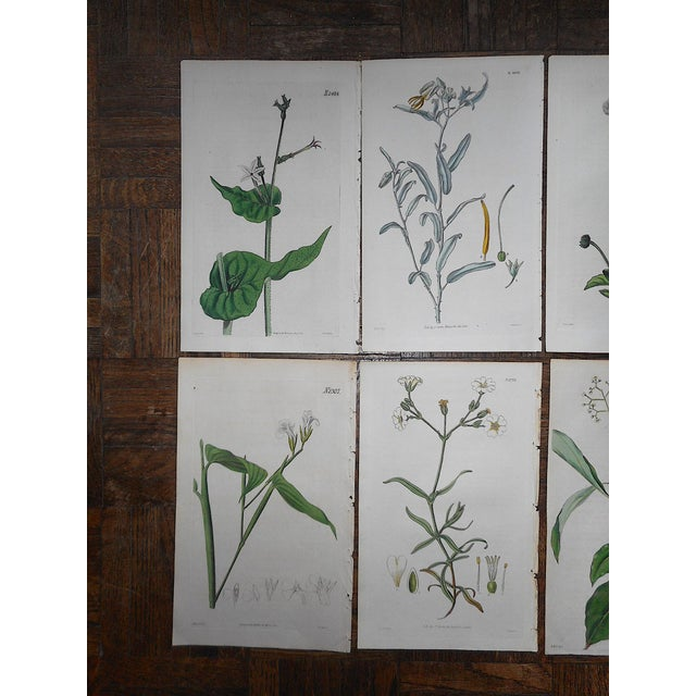 Group of ten (10) authentic antique 19th C. botanical engravings. These engravings were printed in England. All are hand...