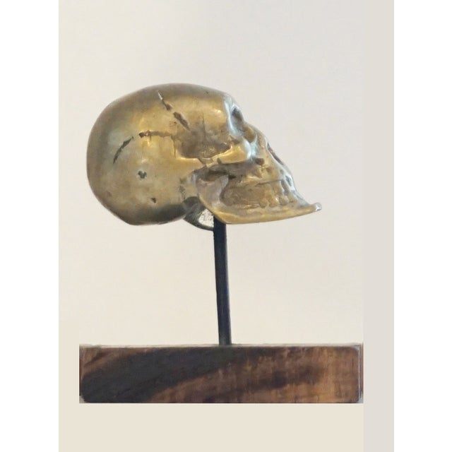 Antique Brass Skull on Walnut Base - Image 3 of 4