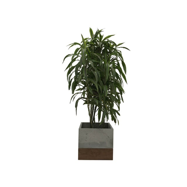 Contemporary Planter For Sale - Image 3 of 8