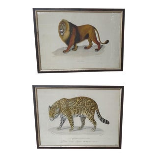 Handcolored Lion and Leopard Prints - a Pair For Sale