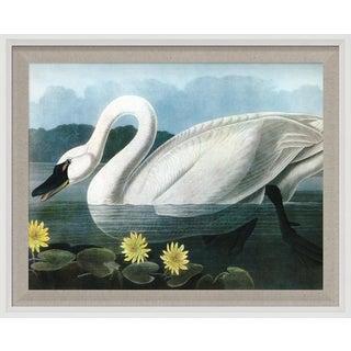 Audubon 20, Framed Artwork For Sale