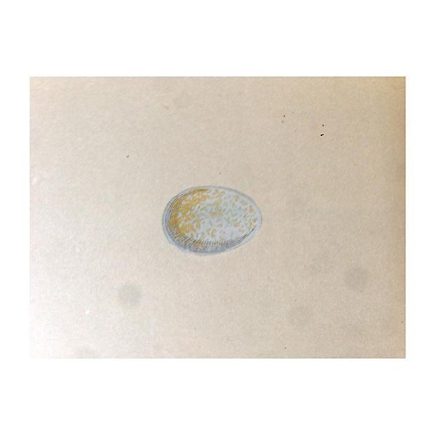 1875 Spotted Fly Catcher Egg Nest Engraving - Image 4 of 5
