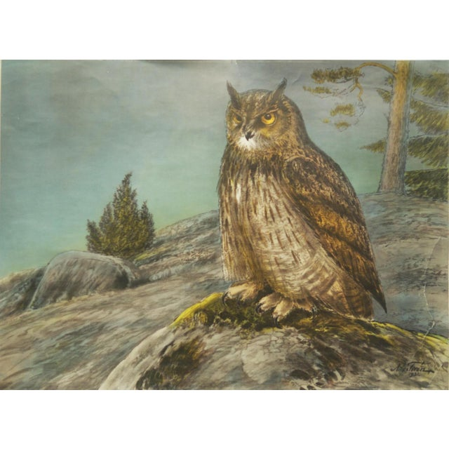 Paper Swedish Vintage Owls School Poster by Nils Tirén, 1960s For Sale - Image 7 of 7