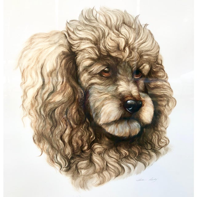 Americana Vintage Artist Rendered Poodle Portrait Drawing in Burl Walnut Frame For Sale - Image 3 of 10