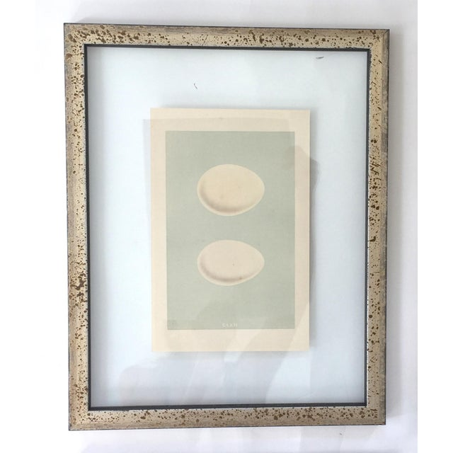 Francis Orpen Morris Framed Antique Morris Egg Prints - Set of 4 For Sale - Image 4 of 11