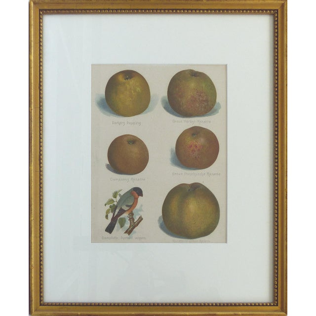 European Botanical Prints of Fruit & Birds - Set of 4 For Sale In Miami - Image 6 of 7
