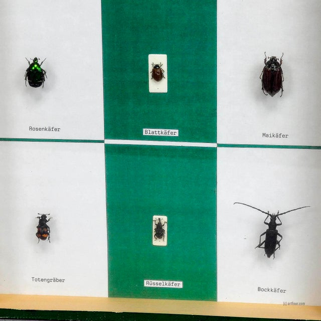 Illustration A Great Vintage School Teaching Display - Diversity Of Beetle Shapes For Sale - Image 3 of 5