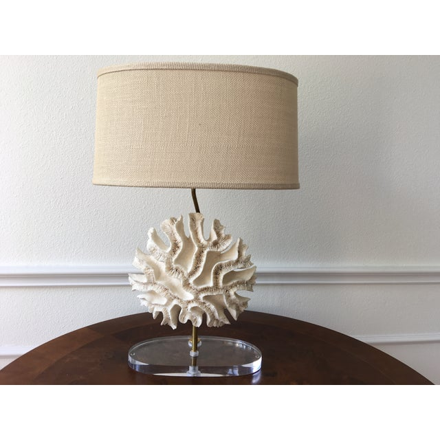 Large pair of natural brain coral specimen lamps professionally mounted on custom oval Lucite bases. Newly wired for...