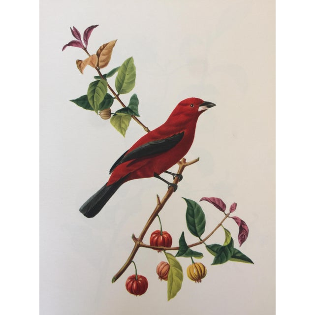 1st Edition Full Color Lithographs of Tropical American Birds - Set of 30 For Sale - Image 4 of 13