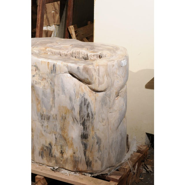 Contemporary Impressively Large Petrified Wood Table Base For Sale - Image 3 of 12