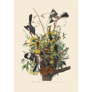 John James Audubon Print, Mocking Bird For Sale