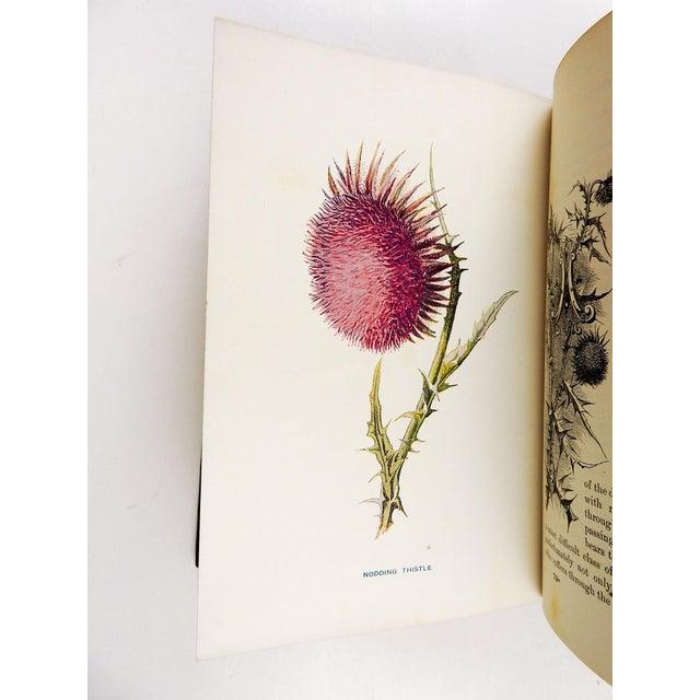 Art Nouveau Familiar Wild Flowers 1902 - 2 Volumes For Sale - Image 3 of 11