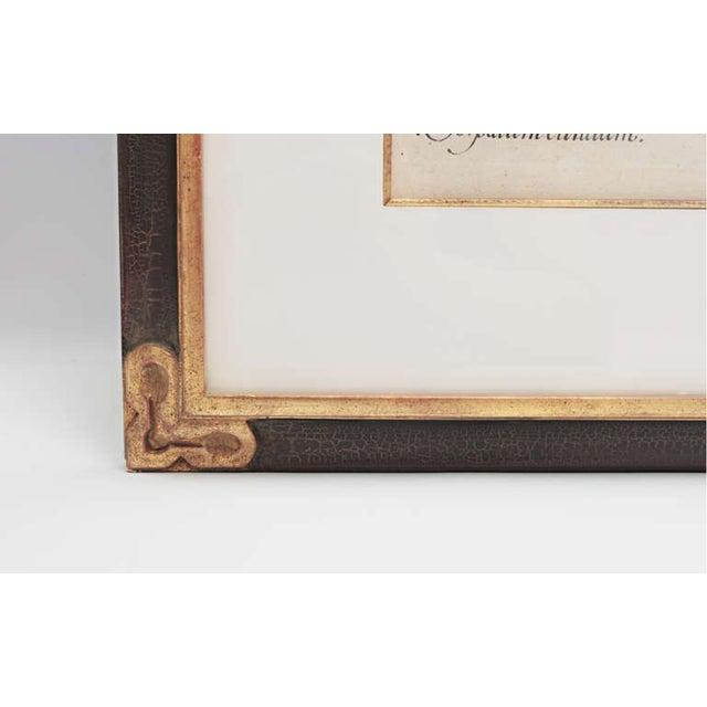 Basil Besler, 1561-1629, original in beautiful black and gold frame.