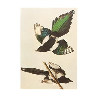 "1966 ""American Magpie"" Lithograph by John James Audubon For Sale"