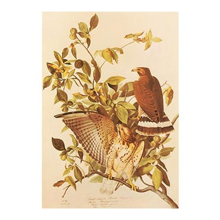 1960s Cottage Print of Broad-Winged Hawk by Audubon For Sale