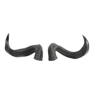 Pair of Decorative Ram Horn Replicas For Sale