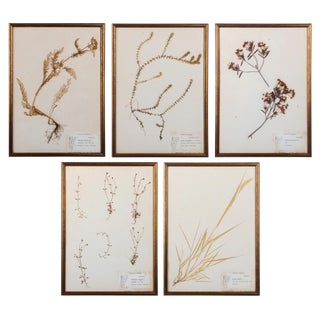 Plants of Vermont, Framed Leaf Collection by Ruth Benoit c. 1975, set of 5 For Sale