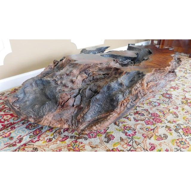 Walnut Driftwood Coffee Table Base - Image 7 of 9