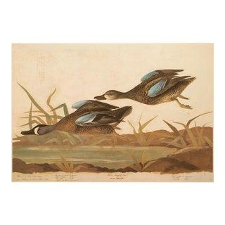 1966 Blue-Winged Teal by Audubon, XL Vintage Cottage or Farmhouse Print For Sale