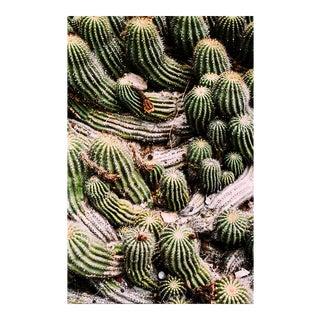 """Little Cacti"" Original Framed Photograph"
