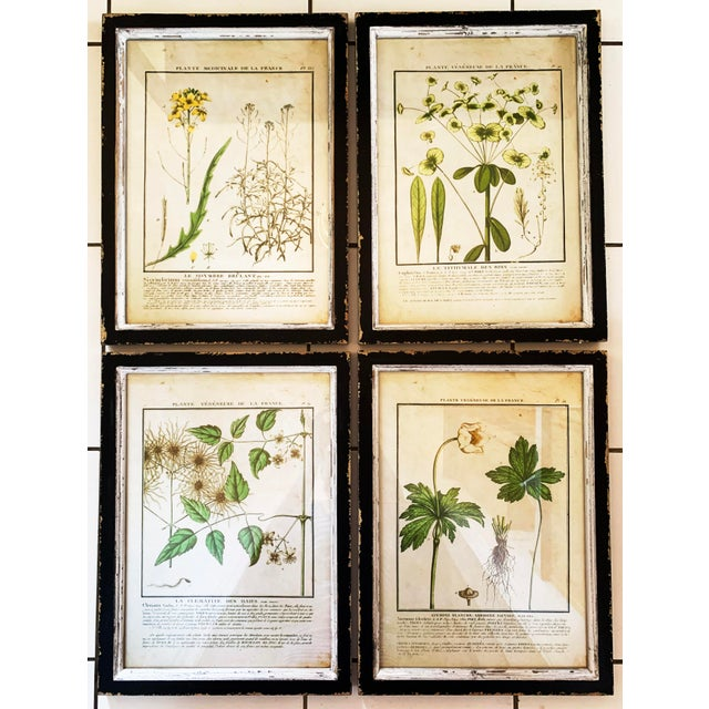 Vintage Framed French Botanical Prints Reproductions - Set of 4 For Sale - Image 13 of 13