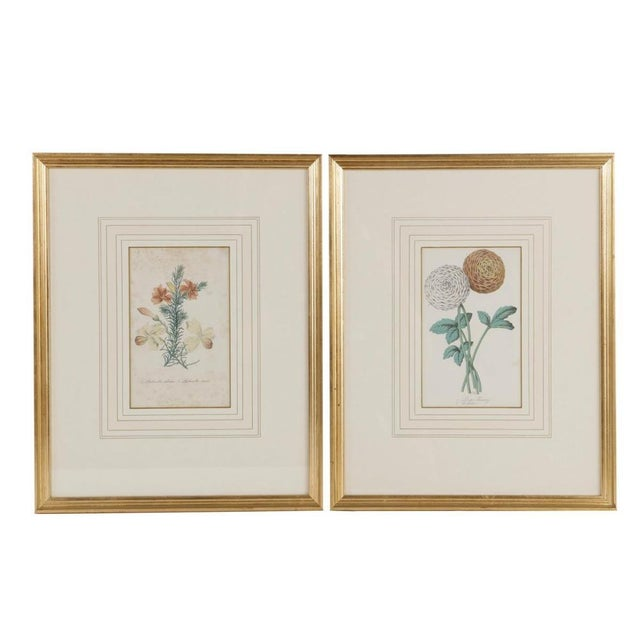 Late 19th Century Set of 12 Antique Hand Colored Collection of Botanical Print Engravings For Sale - Image 5 of 8