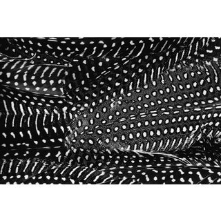 """""""Plumes No. 2"""" Black and White Abstract Feather Photograph Preview"""