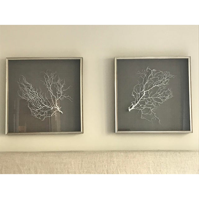Wjc Designs Framed Sea Fan Coral on Belgian Linen For Sale In Boston - Image 6 of 6