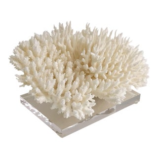 Organic Modern Coral Fragment on Lucite Base