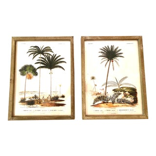 Vintage French Indochina Botanical Palm Tree Reproduction Prints, Framed - a Pair For Sale