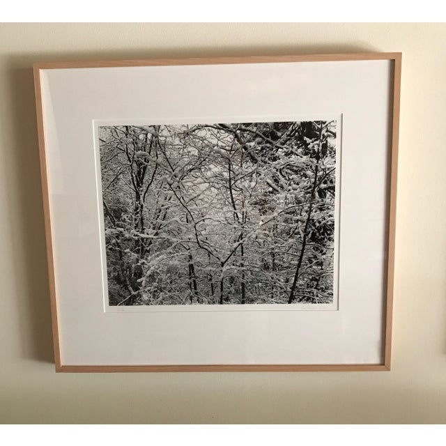 Trees in Snow Photography - Image 2 of 3