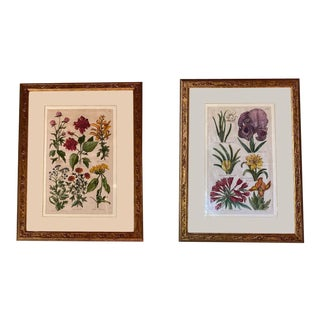 Original Copperplate Engravings by John Hill - a Pair For Sale