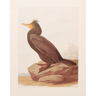 Double-Crested Cormorant by John James Audubon, 1966 Vintage Print For Sale