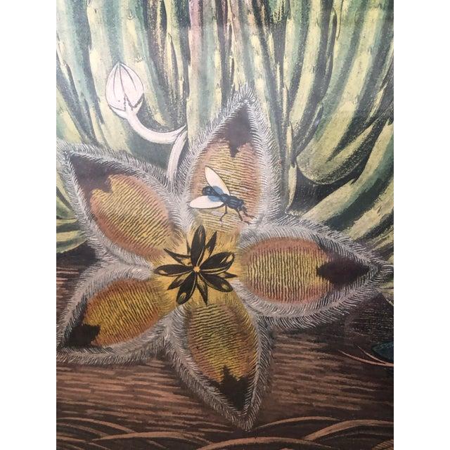 Boho Chic 19th Century Boho Chic Succulent Botanic Print For Sale - Image 3 of 12