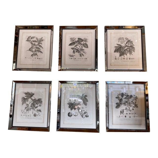 Antique Botanical Prints - Set of Six For Sale