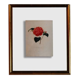 Four J.J. Jung Camellias Pressed Between Glass For Sale