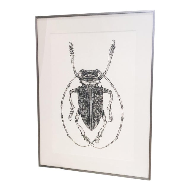 Bessie Daschbach Original Insect Drawing For Sale