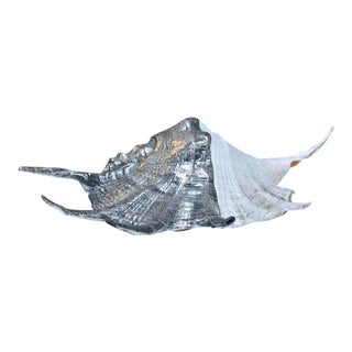 Italian 1960s Pewter Sea Shell For Sale