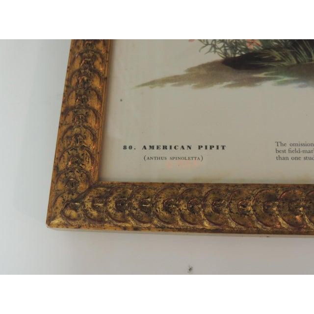 1950s Set of 3 Bird Prints Framed in Gold Frames For Sale - Image 5 of 7