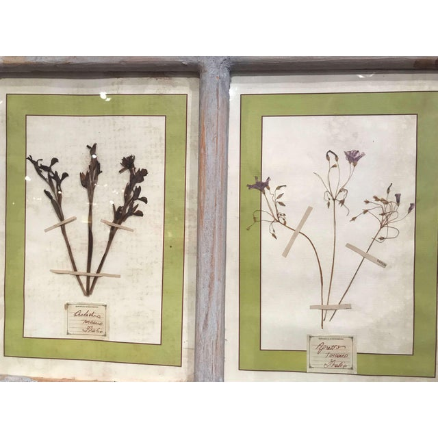 Green Pair of 21st Century Italian Dried Botanical Flowers in Painted Frames For Sale - Image 8 of 11