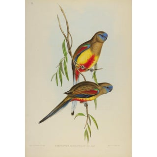 John Gould Print, Crimson-Bellied Parrakeet Plate 33 - Hill House Ed. For Sale