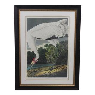 John James Audubon Print of Whooping Crane in Ltd Edition by M Bernard Loates in Custom Archival Framing For Sale