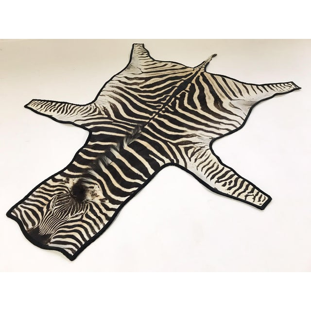 Forsyth Authentic Zebra Hide Rug Trimmed in Black Velvet For Sale In Saint Louis - Image 6 of 6