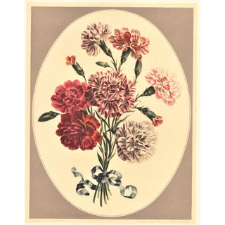Botanical Lithograph-Carnations For Sale
