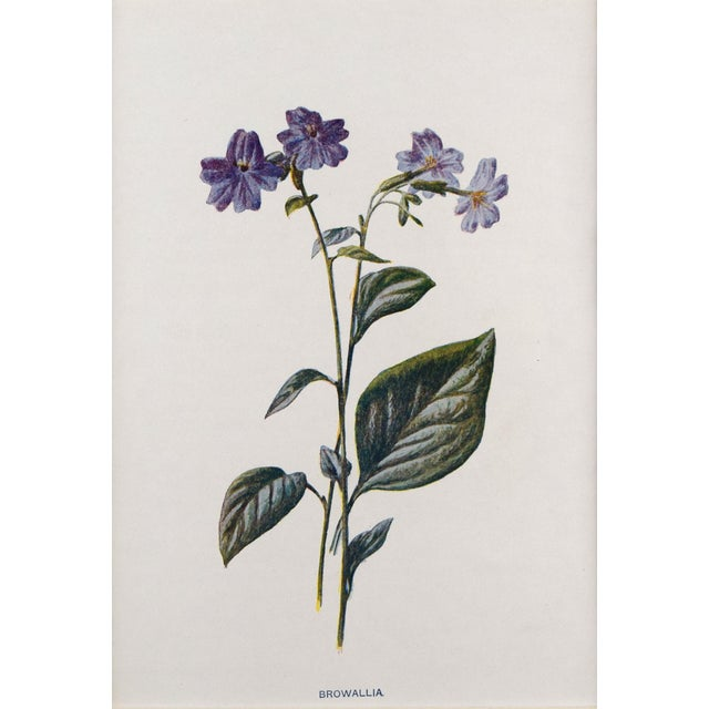 Antique English Botanical Prints by Hulme C.1900 - Set of 6 For Sale - Image 10 of 13