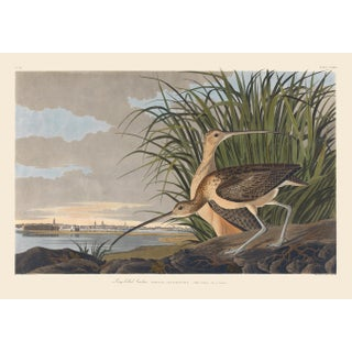 John James Audubon Print, Long-Billed Curlew For Sale