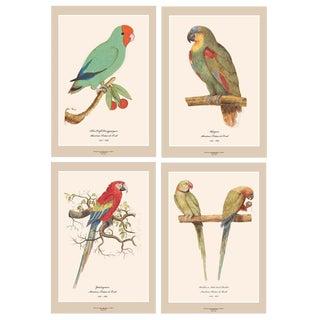XL 1590s Contemporary Prints of Anselmus Boëtius De Boodt Parrots, Set N1 of 4 For Sale
